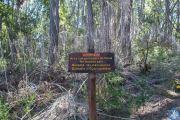 Nationalpark Los Alerces
