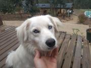 Der Hund mit den eisblauen Augen