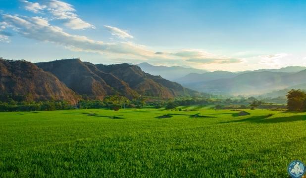 Peru Reisfelder